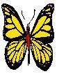 Yel butterfly