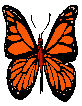 Or butterfly